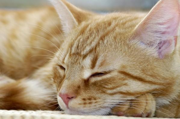 Katzenhaltung - schlafende Katze